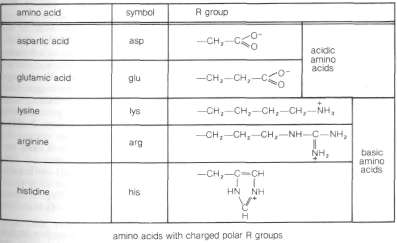 Structures of the 20 amino acids commonly found in proteins.